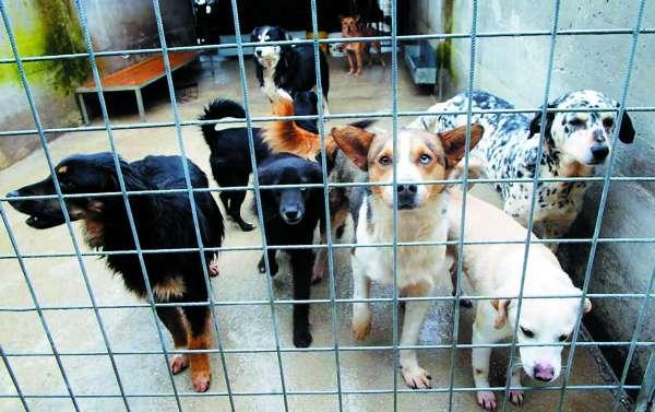 Cadaveri di cani trovati nella provincia di Napoli