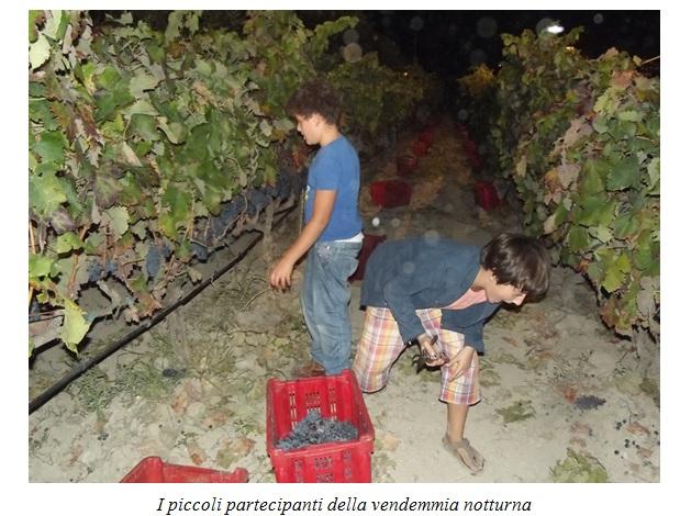 Un mare di…vino nelle Terre salentine del Negroamaro